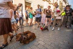22do desfile del perro basset (Marsz Jamnikow) en la plaza del mercado principal Fotos de archivo