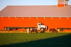 Do equipamento caminhão grande semi no celeiro e em cavalos vermelhos dianteiros Fotos de Stock Royalty Free