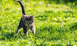 Do gato malhado do gatinho retrato fora Fotos de Stock