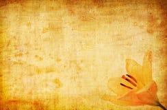 Do grunge do amarelo fundo abstrato lilly Imagens de Stock Royalty Free