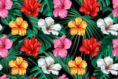 Do hibiscus tropical das folhas do vetor teste padrão sem emenda Fotografia de Stock