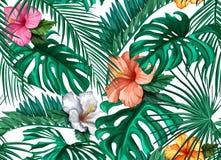 Do hibiscus tropical das folhas do vetor teste padrão sem emenda Imagens de Stock Royalty Free