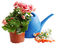 Lata molhando com flores Fotos de Stock