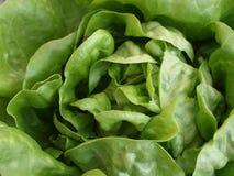 Do Kale fim acima Foto de Stock Royalty Free