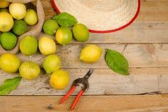 Do limão vida ainda Fotografia de Stock Royalty Free