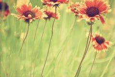 Do mundo um fim floral acima fotos de stock