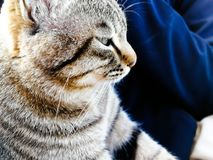 Do not disturb me staring you. A cat stay in the arm safy.the girls and women like to foste the pet in home. spend the spare and leisure time for life. the pet Royalty Free Stock Images