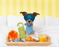 Do not disturb sign with dog Royalty Free Stock Image