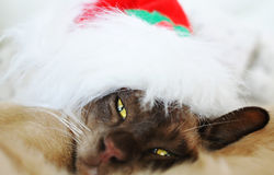 Do not disturb sleepy Christmas cat Royalty Free Stock Image
