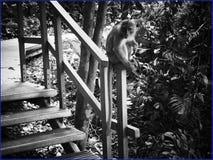 do not feed the monkeys stock photos