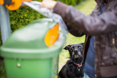 Do not let your dog faul!. Young woman grabbing a plastic bag in a park to tidy up after her dog later royalty free stock photography