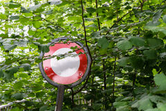 Do Not Pass Stop Sign In Forest Overgrown By Trees Royalty Free Stock Image