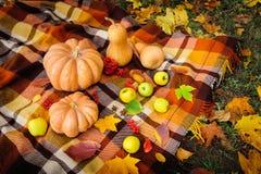 Do outono da ação de graças vida ainda Fotografia de Stock