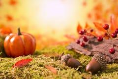 Do outono da natureza vida ainda na luz brilhante Foto de Stock