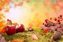Do outono da natureza vida ainda na luz brilhante Imagens de Stock