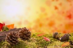 Do outono da natureza vida ainda na luz brilhante Imagem de Stock