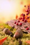 Do outono da natureza vida ainda na luz brilhante Fotos de Stock Royalty Free