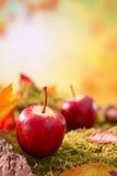 Do outono da natureza vida ainda na luz brilhante Fotografia de Stock