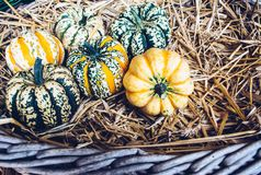 Do outono uma vida rústica ainda com abóboras Foto de Stock Royalty Free