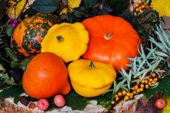 Do outono vida ainda, ação de graças - colheita de abóboras diferentes, espinheiro cerval de mar, folhas coloridas, fundo vibrant Imagens de Stock