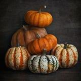 Do outono vida ainda abóbora bonita foto de stock royalty free