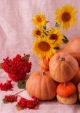 Do outono vida ainda Abóboras para Dia das Bruxas e o dia da ação de graças Fotos de Stock Royalty Free