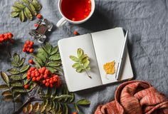 Do outono vida ainda Bloco de notas vazio, chá, ashbery, em um fundo cinzento, vista superior Espaço livre para o texto Fotos de Stock