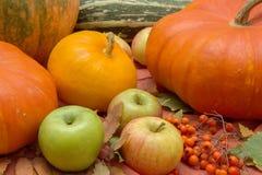 Do outono vida ainda com abóboras e maçãs Foto de Stock Royalty Free