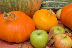 Do outono vida ainda com abóboras e maçãs Fotos de Stock Royalty Free