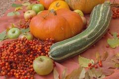 Do outono vida ainda com abóboras e maçãs Imagens de Stock
