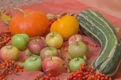 Do outono vida ainda com abóboras e maçãs Fotografia de Stock Royalty Free