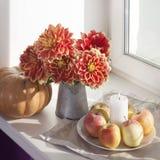 Do outono a vida ainda com as dálias vermelhas em um frasco da lata, na abóbora, em um copo do chá e em maçãs na janela no tempo  Imagem de Stock