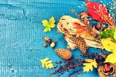 Do outono vida ainda com as folhas da queda e as plantas coloridas da floresta f Imagens de Stock