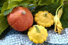 Do outono vida ainda da abóbora e da polpa pattypan no fundo verde da folha Imagem de Stock Royalty Free
