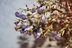 Do outono vida ainda das flores imagem de stock royalty free