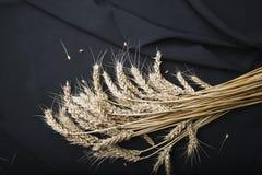 Do outono vida ainda das orelhas do trigo em um fundo preto da tela fotos de stock royalty free