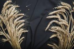 Do outono vida ainda das orelhas do trigo em um fundo preto da tela fotos de stock