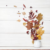 Do outono vida ainda Folhas caídas no vaso no fundo branco Fotografia de Stock Royalty Free