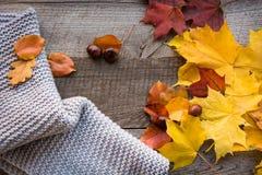 Do outono vida ainda Seque as folhas, lenço morno na placa de madeira Vista superior Configuração lisa Imagem de Stock Royalty Free