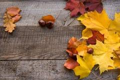 Do outono vida ainda Seque as folhas na placa de madeira Vista superior Espaço liso da configuração e da cópia Imagens de Stock Royalty Free