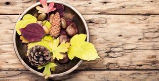 Do outono vida simbólica ainda Imagens de Stock