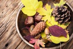 Do outono vida simbólica ainda Fotos de Stock