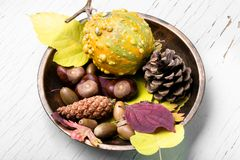 Do outono vida simbólica ainda Imagens de Stock Royalty Free