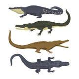 Do perigo verde do crocodilo dos desenhos animados jacaré predador e australiano dos animais selvagens do rio do réptil do carnív ilustração royalty free