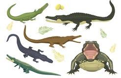 Do perigo verde do crocodilo dos desenhos animados jacaré predador e australiano dos animais selvagens do rio do réptil do carnív ilustração do vetor