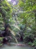 Do que o parque nacional Tailândia de Bok Khorani dentro do parque nacional imagens de stock