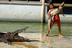 ` DO ` SAMUTPRAKARN, TAILÂNDIA - 25 DE DEZEMBRO DE 2016: É mostra do crocodilo na exploração agrícola o 25 de dezembro de 2016 em Imagem de Stock