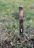 Do vampiro vida ainda com a estaca de madeira na terra foto de stock royalty free