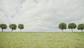 Do verão geométrico de Minimalistic da simetria das árvores fundo natural Fotos de Stock Royalty Free