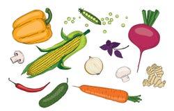 Do verde fresco da mola dos vegetais e das ervas coleção orgânica do vetor Foto de Stock Royalty Free